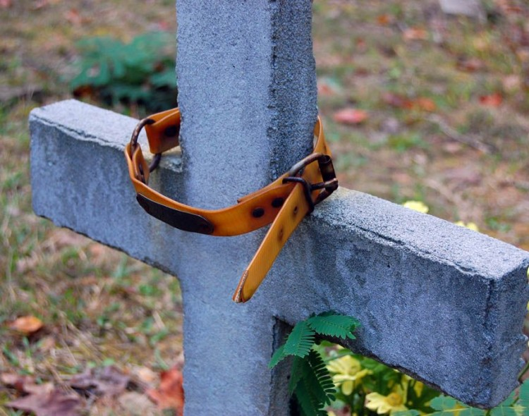 Kaune – planai įkurti gyvūnų kapines